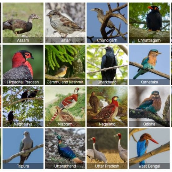 State Birds of India