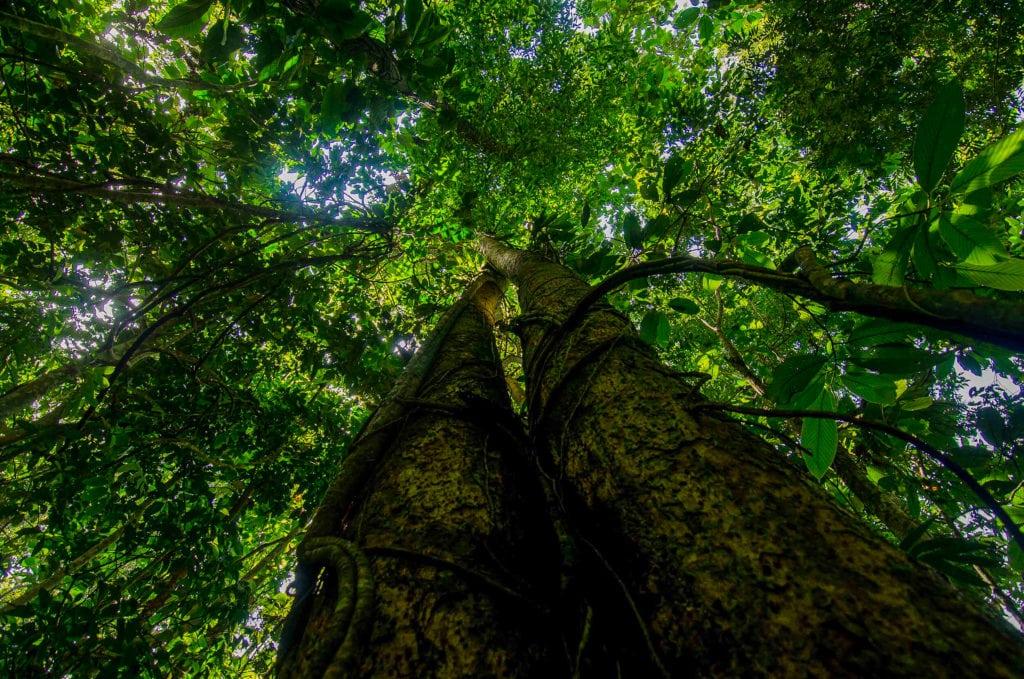 Dehing Patkai Wildlife Sanctuary
