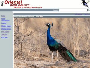 Oriental Bird Images