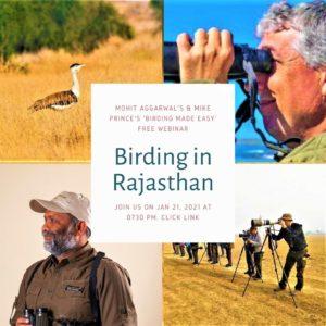 Birding in Rajasthan