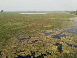 Keoladeo Ghana National Park